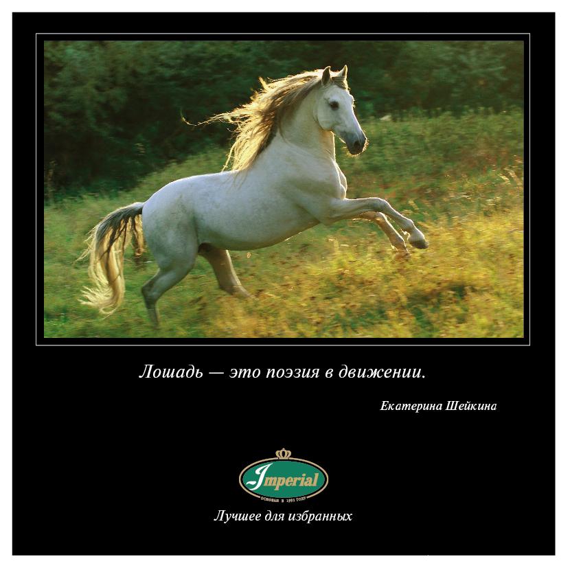 В этот день 15 мая 1998 года состоялась премьера фильма Роберта Редфорда «Заклинатель лошадей», с которого началась актерская карьера Кейт Босуорт.